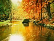 Autumn colorful forest above mountain river. Water under leaves trees. Stock Image