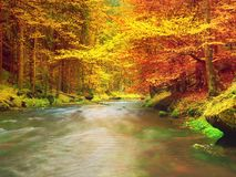 Autumn colorful forest above mountain river. Water under leaves trees. Stock Photo