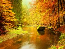 Autumn colorful forest above mountain river. Water under leaves trees. Stock Photos