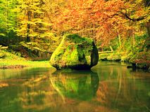 Autumn colorful forest above mountain river. Water under leaves trees Stock Photos