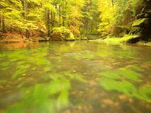 Autumn colorful forest above mountain river. Water under leaves trees with yellow orange  reflection. Autumn colorful forest above mountain river. Water under Stock Photos