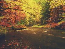 Autumn colorful forest above mountain river. Water under leaves trees with yellow orange  reflection. Autumn colorful forest above mountain river. Water under Stock Photo