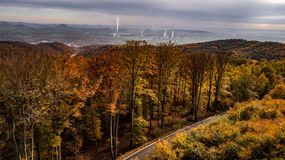 Autumn colorful forest with factories and road