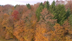 Autumn colorful forest flyby stock video