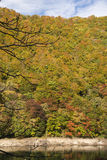 Autumn colorful forest royalty free stock images