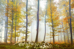 Autumn colorful forest Royalty Free Stock Image
