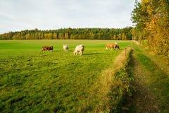 Autumn colorful landscape royalty free stock image