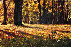 Autumn colorful landscape. Early autumn forest with yellowed autumn trees. Autumn colorful landscape with yellowed autumn trees. Autumn forest in early autumn Royalty Free Stock Photos