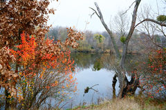 Autumn colorful landscape by the river Royalty Free Stock Image