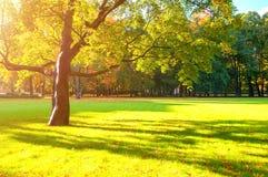 Autumn colorful landscape in sunny autumn landscape park lit by sunlight. Autumn park in soft sunshine Royalty Free Stock Photo
