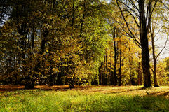 Autumn colorful landscape view of sunny autumn forest. Forest autumn landscape with yellowed autumn trees. Stock Photography