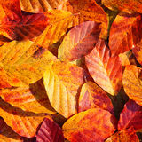 Autumn colorful leaf background Stock Photography