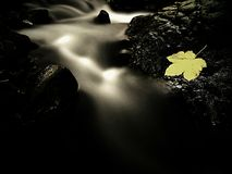 Autumn colorful leaf. Castaway on wet slipper stone in stream Royalty Free Stock Photography