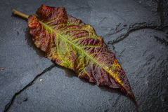 Autumn, colorful  leaf fell on the wet footpath Stock Photos
