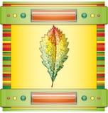 Autumn colorful leaf. Stock Photo