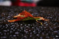 Autumn colorful leaf lying on the roof of the car royalty free stock photos