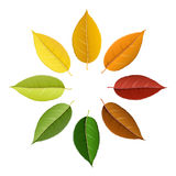 Autumn colorful leaf palette. Colorful autumn leaf palette in circle, with shades of fall isolated on white. Realistic vector illustration for autumn and fall Stock Image