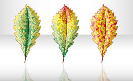 Autumn colorful leafs. Royalty Free Stock Photos