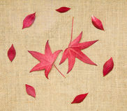 Autumn colorful leaves Royalty Free Stock Images