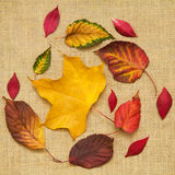 Autumn colorful leaves Stock Image
