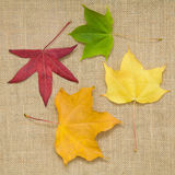 Autumn colorful leaves Royalty Free Stock Photography