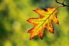 Autumn, colorful leaves Stock Photo