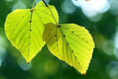 Autumn, colorful leaves Stock Photos