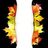 Autumn colorful leaves Stock Photo