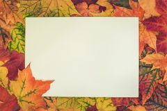 Autumn colorful leaves around white blank for your text. Top view and copy space. Fall concept. Royalty Free Stock Image
