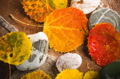Autumn colorful  leaves, background Royalty Free Stock Images
