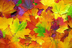 Autumn colorful leaves background Stock Images