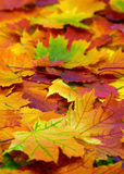 Autumn colorful leaves background Stock Photography