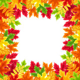 Autumn colorful leaves frame. Vector illustration. Stock Images