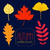 Autumn colorful leaves set Royalty Free Stock Photos
