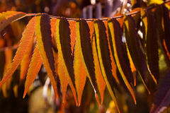 Autumn. Colorful autumn leaves on a tree Stock Images