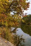 Autumn colorful leaves of the trees in the forest by the river Stock Photo