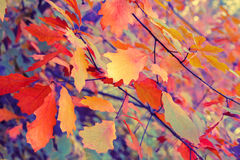 Autumn colorful leaves Stock Photo