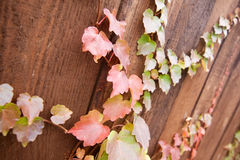 Autumn colorful leaves on wood. En fence Royalty Free Stock Image