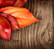 Autumn. Colorful leaves on a wooden background Stock Image