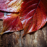 Autumn colorful leaves Stock Photos