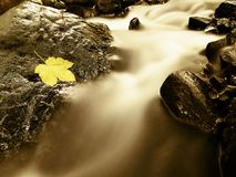Autumn colorful maple leaf. Castaway rotting on wet slipper stone in cold  stream Stock Photo