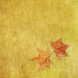 Autumn colorful maple leaf on grungy background Stock Images