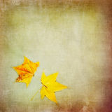 Autumn colorful maple leaf on grungy background Stock Image