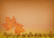 Autumn leaves. Autumn colorful maple leaf on grungy background stock illustration