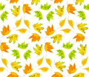 Autumn colorful maple leaves pattern stock photo