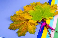 Autumn colorful maple leaves and set of colored paper royalty free stock images