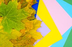 Autumn colorful maple leaves and set of colored paper stock image