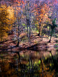 Autumn colorful misty reflexion landscape. Stock Image