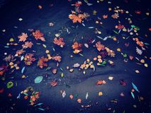 Autumn. Colorful autumn in Moscow Stock Photography