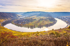 Autumn Colorful Moselle Landscape und Weinberge stockbilder